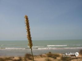 ساحل بندر ریگ